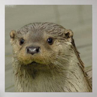 Giant River Otter  Poster