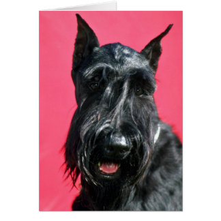 Giant Schnauzer Greeting Cards