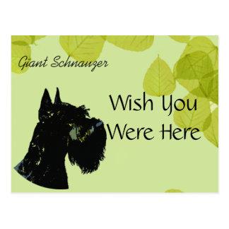 Giant Schnauzer ~ Green Leaves Design Postcard