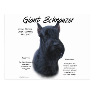 Giant Schnauzer History Design Postcard