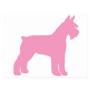 Giant Schnauzer pink Post Cards