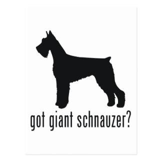 Giant Schnauzer Post Card