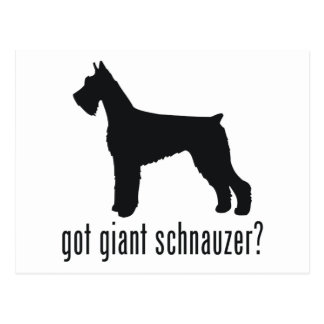 Giant Schnauzer Post Cards