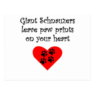 Giant Schnauzers Leave Paw Prints On Your Heart Post Card