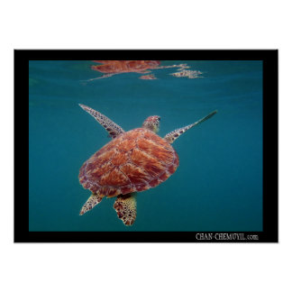 Giant Sea Turtle Poster
