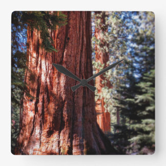 Giant Sequoia Clock