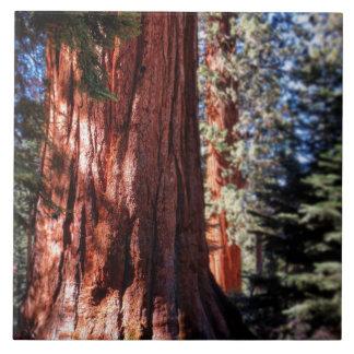 Giant Sequoia Photo Tile