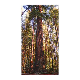 Giant Sequoia Redwood Wrapped Canvas Print