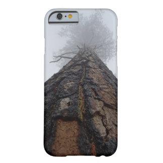 Giant Sequoia tree photo Phone case