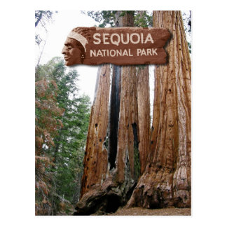 Giant Sequoia trees, Sequoia National Park, CA Postcard