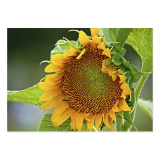 Giant Sunflower - ACEO 12 Large Business Cards (Pack Of 100)