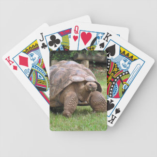 Giant tortoise bicycle playing cards