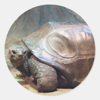 Giant Tortoise Sticker