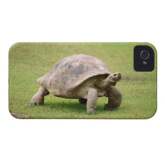 Giant Tortoise walking on grass Case-Mate iPhone 4 Case