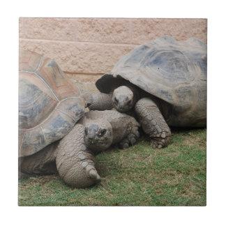 giant tortoises tile