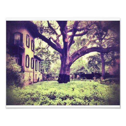 Giant Tree In Savannah Photo Print