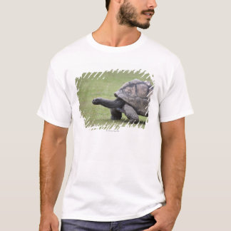 Giant turtle in grass T-Shirt