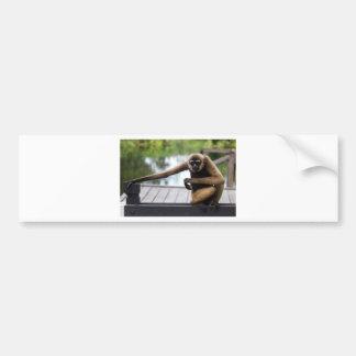 Gibbon Bumper Stickers