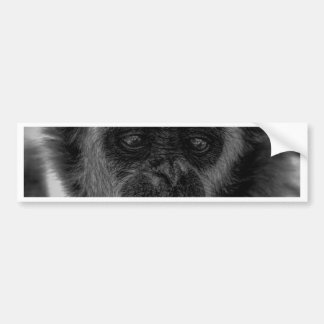 Gibbon wildlife indonesia mammal bumper sticker