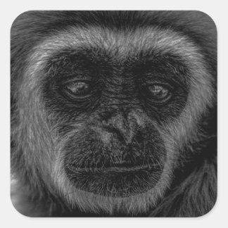 Gibbon wildlife indonesia mammal square sticker