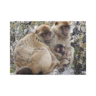 Gibraltar Apes - Canvas Print
