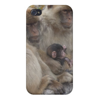 Gibraltar Apes - iPhone4 Case iPhone 4 Cases