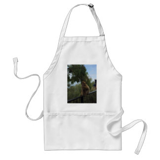Gibraltar Caves St Michael's Cave Standard Apron