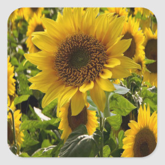 Gift Bags Sunflowers Square Sticker