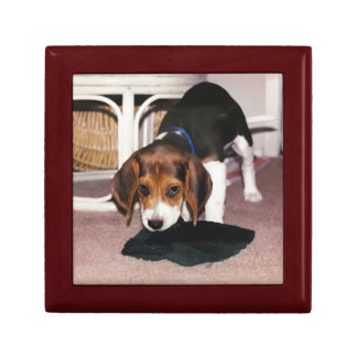 Gift box with photograph of beagle puppy