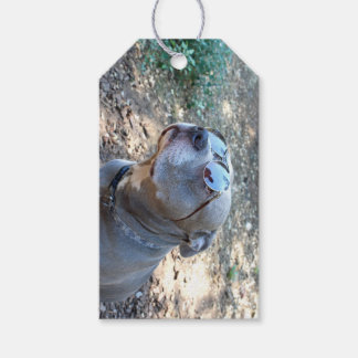 Gift For A Cool Guy Pitbull Gift Tags