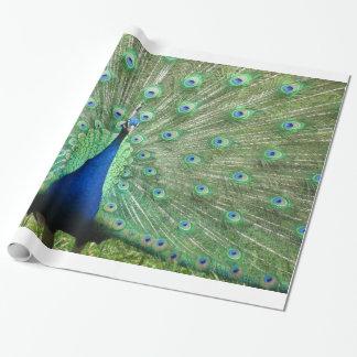 Gift Wrap - Peacock