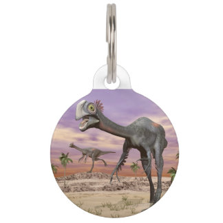 Gigantoraptor dinosaurs in the desert - 3D render Pet ID Tag