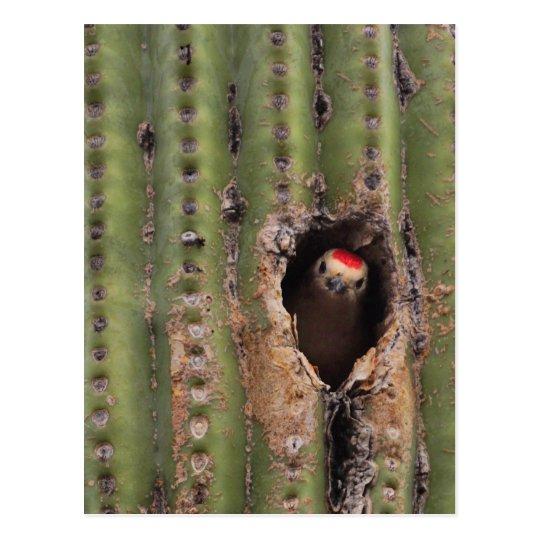 Gila Woodpecker in Saguaro Postcard