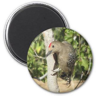 Gila Woodpecker Magnet