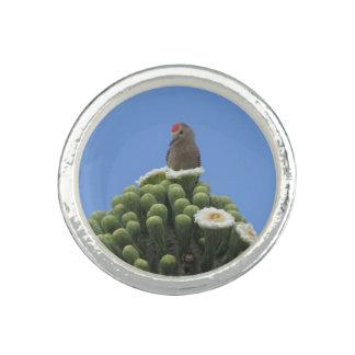 Gila Woodpecker on Saguaro Blooms Photo Rings
