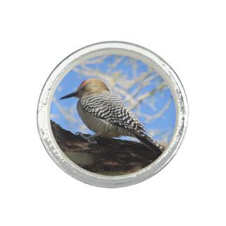 Gila Woodpecker Rings