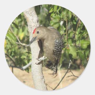 Gila Woodpecker Round Sticker