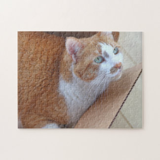 Ginger and white tabby in a cardboard box jigsaw puzzle