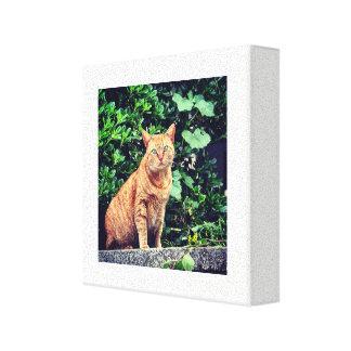 Ginger cat canvas print