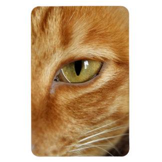 ginger cat rectangular photo magnet