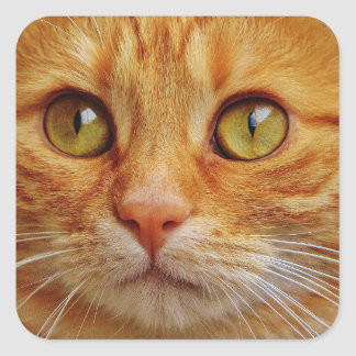Ginger Cat Square Stickers - Glossy