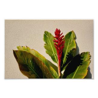 Ginger Flower Photo