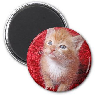 Ginger Kitten 2 Inch Round Magnet