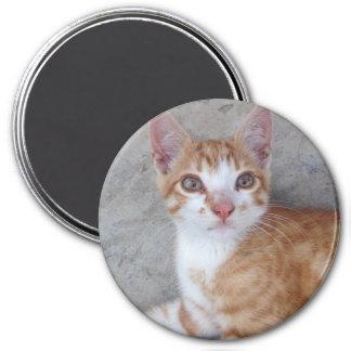 Ginger Kitten 3 Inch Round Magnet