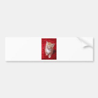 Ginger Kitten Bumper Sticker