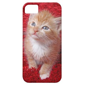 Ginger Kitten Case For The iPhone 5