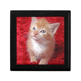 Ginger Kitten Gift Box