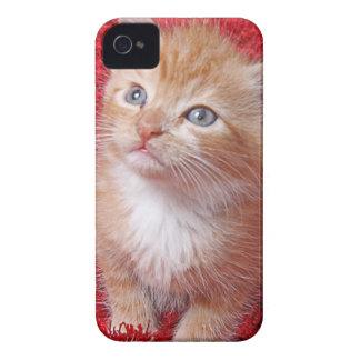 Ginger Kitten iPhone 4 Case-Mate Case