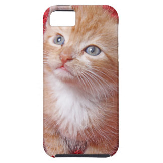 Ginger Kitten iPhone 5 Covers
