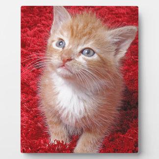 Ginger Kitten Plaque